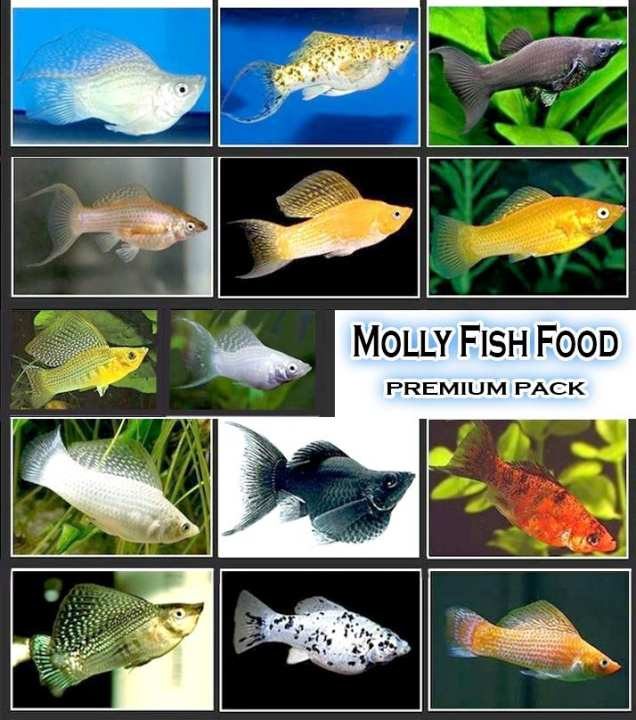 Fish Food For All Species Of Molly'S/Mollies - Premium Pack