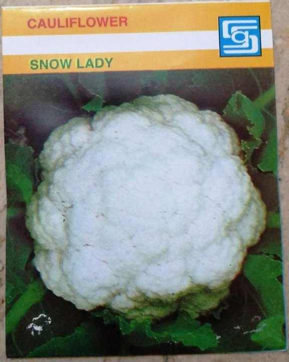 Cauliflower (Snow Lady)
