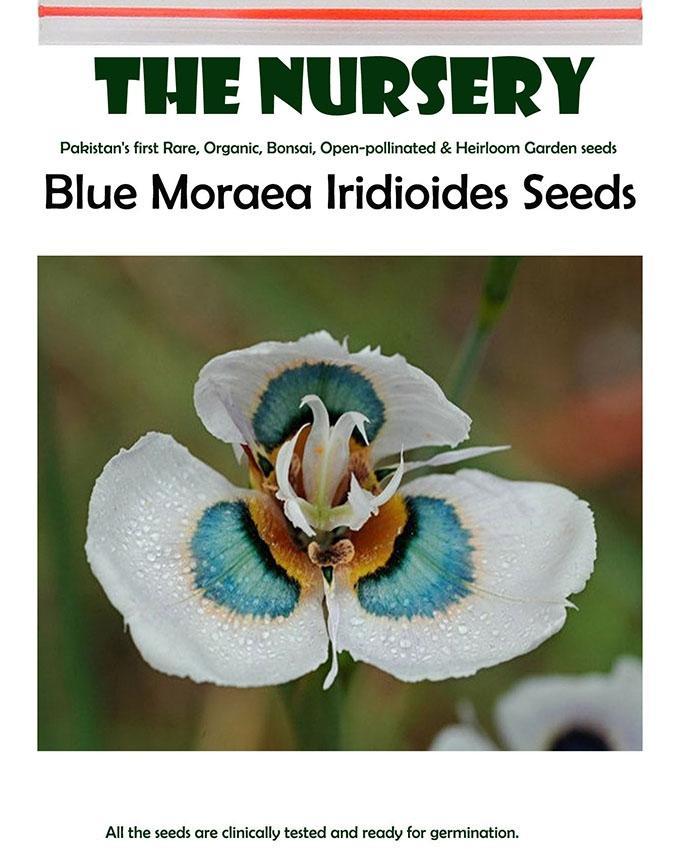 Blue Moraea Iridioides Flower Seeds