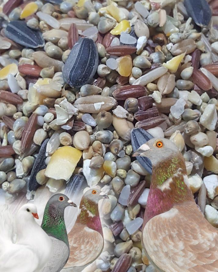 Seed Mix - Feed For Pigeon - Kabootar Dana