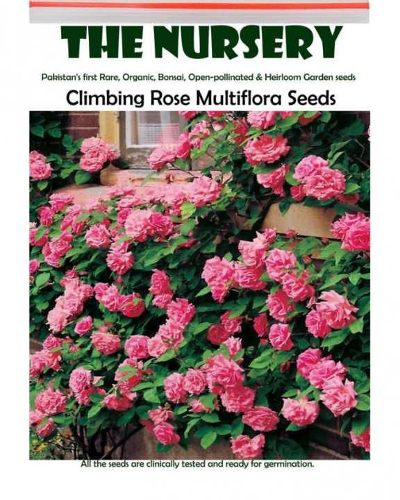 Climbing Rose Multiflora Seeds