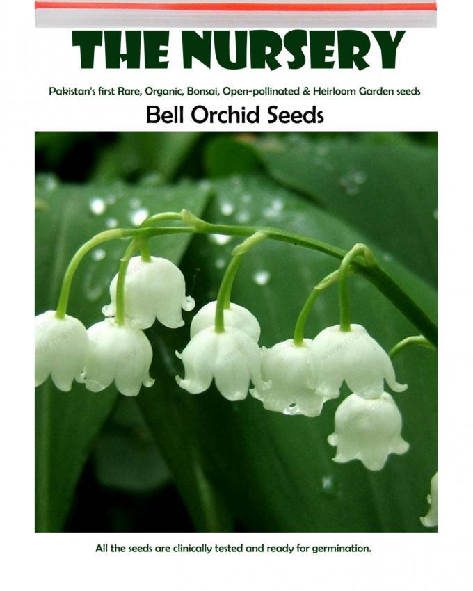 Bell Orchid Seeds