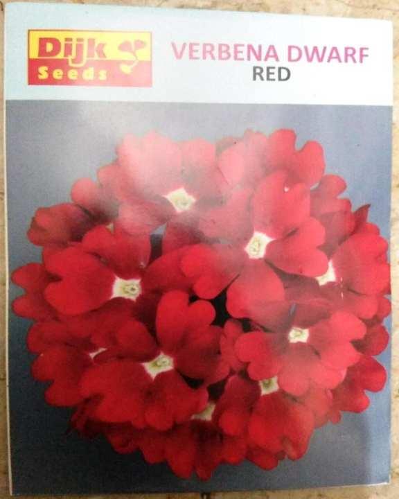 Winter Flower Verbena Dwarf Red