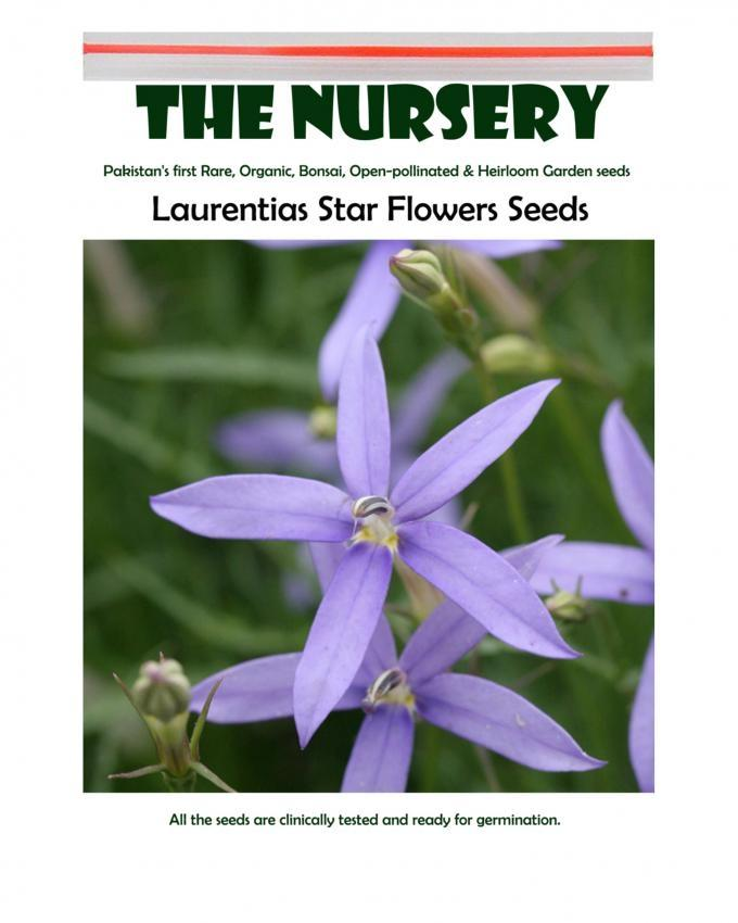 Laurentias Star Flower Seeds
