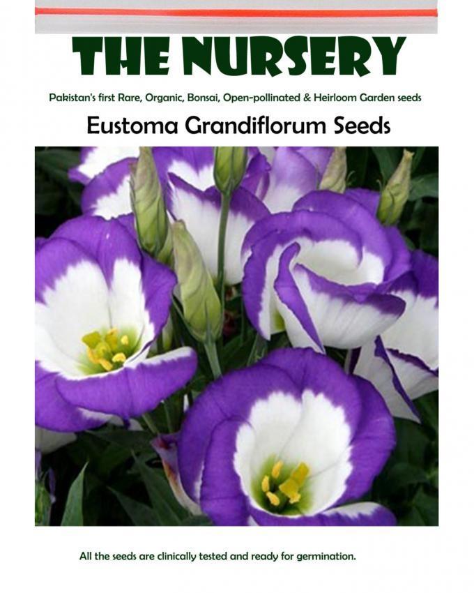 Eustoma Grandiflorum Lisianthus Seeds