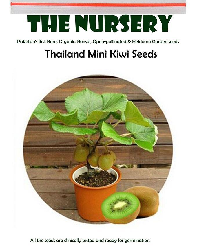 Thailand Mini Kiwi Seeds