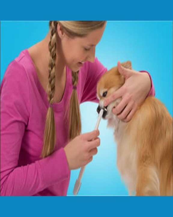 3 Pcs Super Soft Pet Dog Finger Toothbrush Teeth Care Dogs Cat Cleaning Supplies