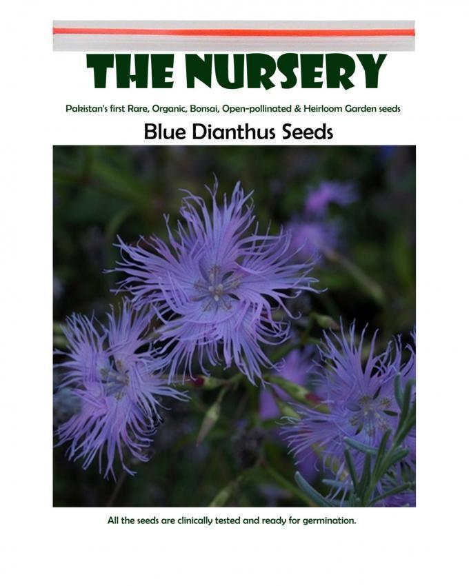 Blue Dianthus Seeds