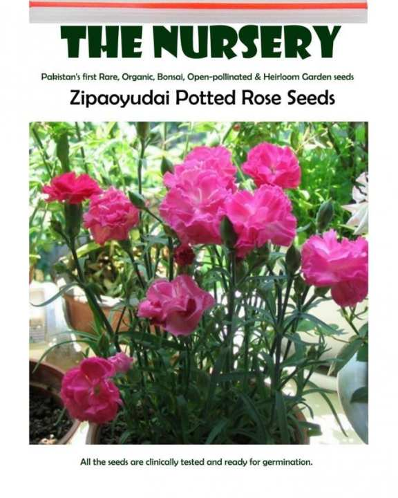 Zipaoyudai Potted Rose Seeds