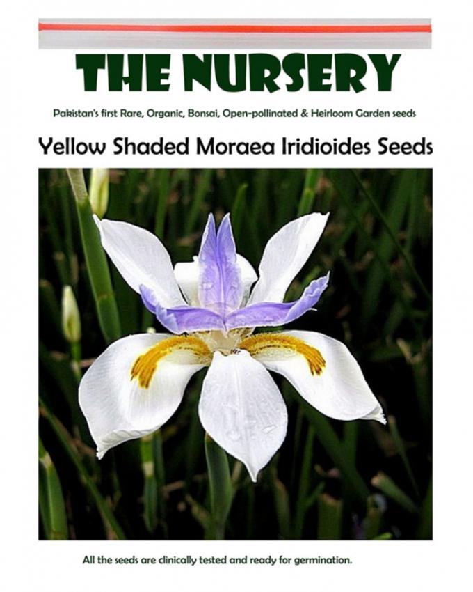 Moraea Iridioides Flower Seeds