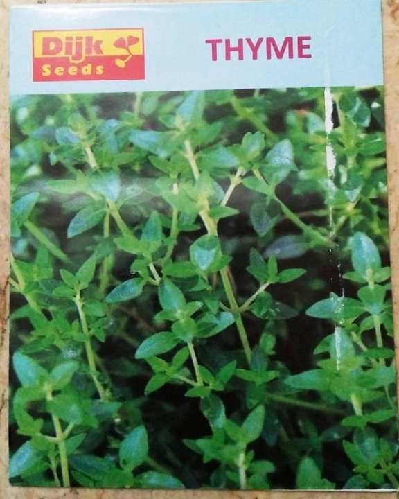 Thyme Seeds For Gardening