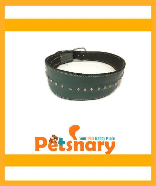 Fancy collar for hounds / Best for large Breed Dogs