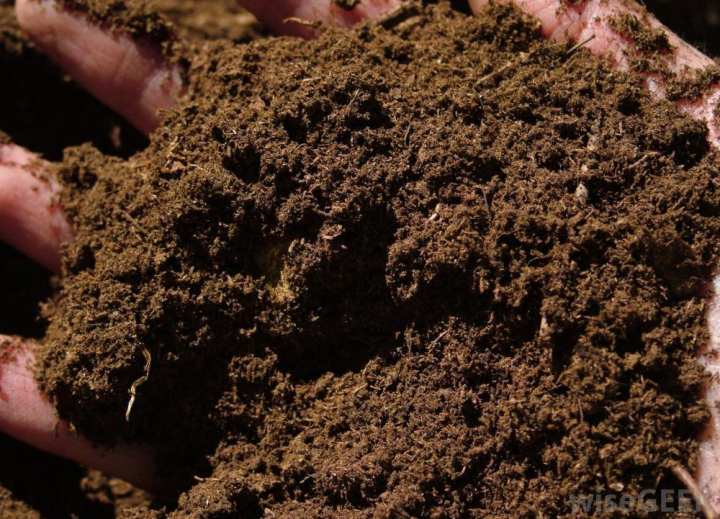 1 Kg Peat Moss For All Type Seedling Proffesional Garden Soil Mix