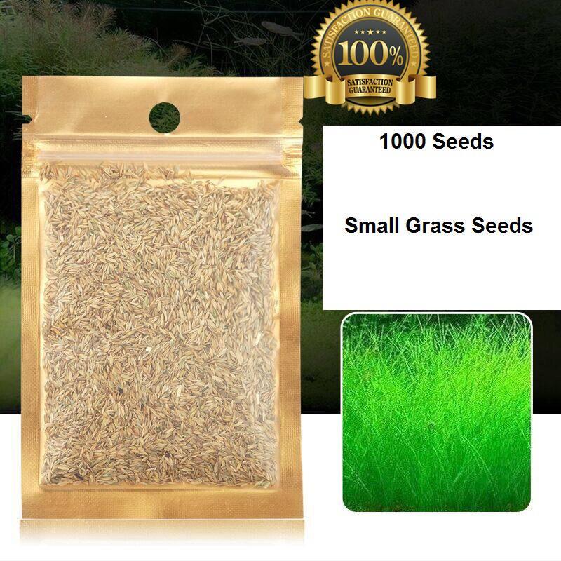 Prospects Small Grass Seed Aquarium Plants Live Grass Seeds - Aquarium  Grass - 1000 Seeds / Bag