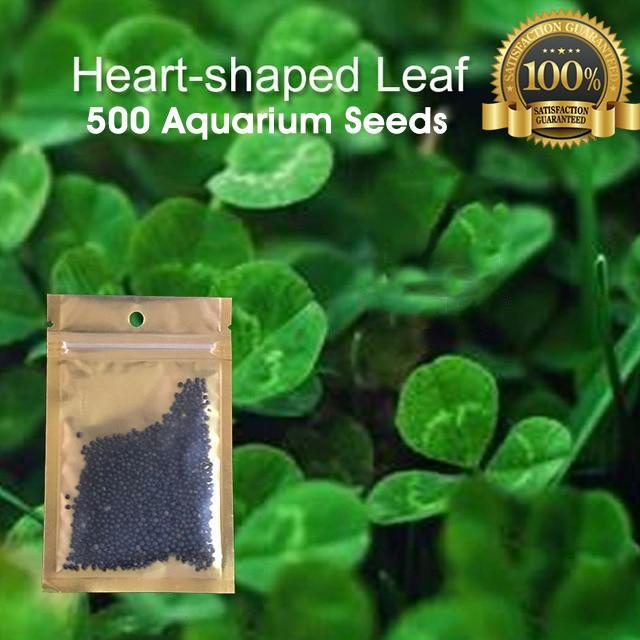 500 Hear Shaped Leaf Aquarium Plant Seeds Aquatic Seeds Water Tank Seeds  Original & 100% Germination Rate