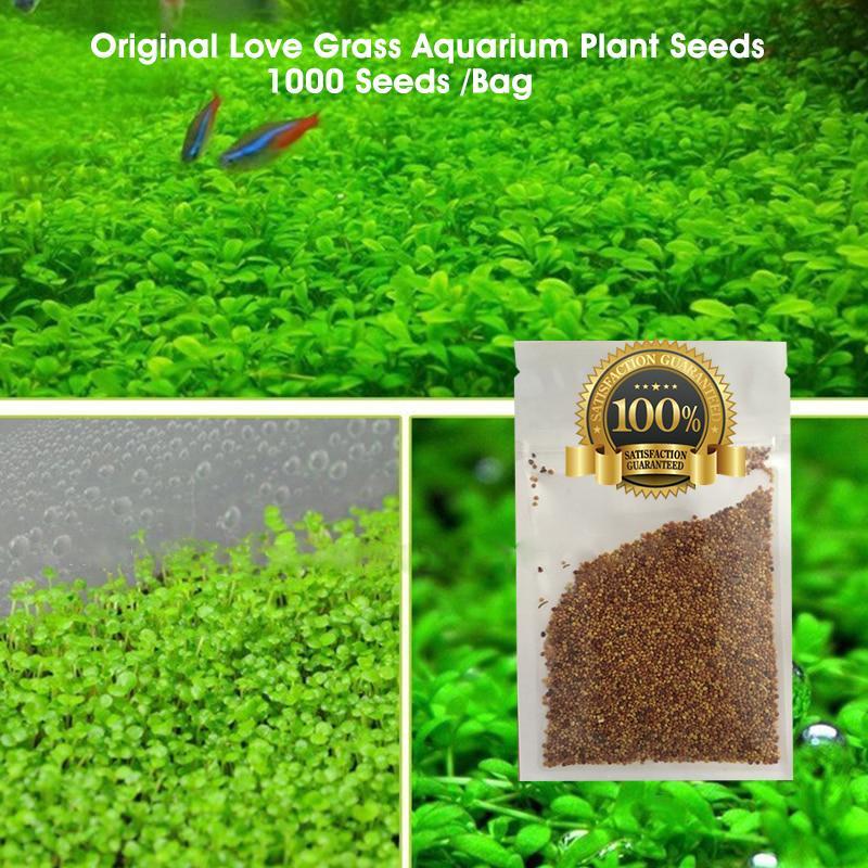 1000 Pcs Love Grass Aquarium Plant Seeds Aquatic Seeds Water Tank Seeds  100% Original & Germination Rate