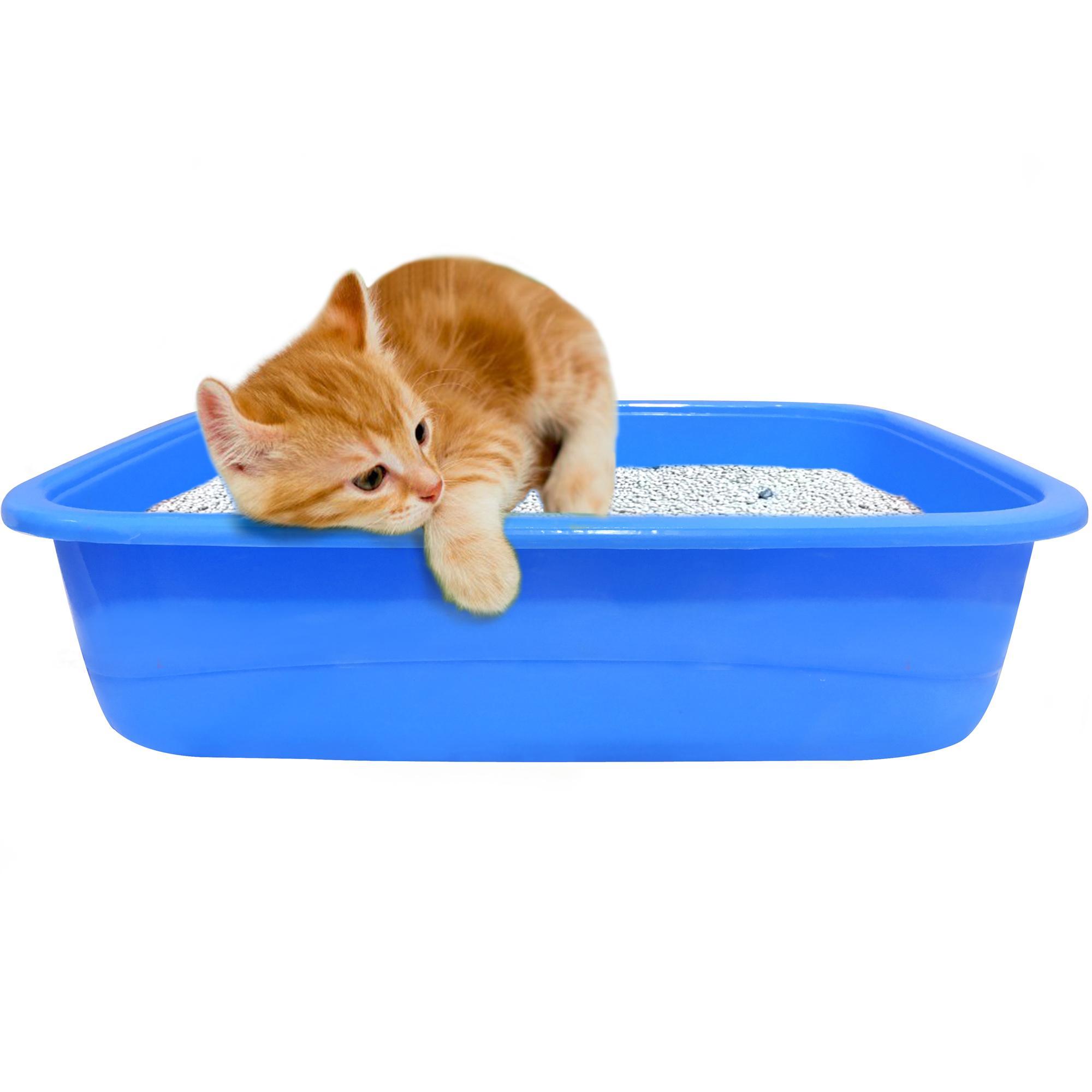 Cats Supplies Online in Pakistan - Daraz pk