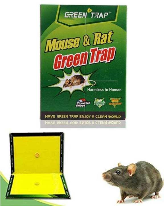 Expert  Mouse / Rat Catcher  (Rat Terminator)