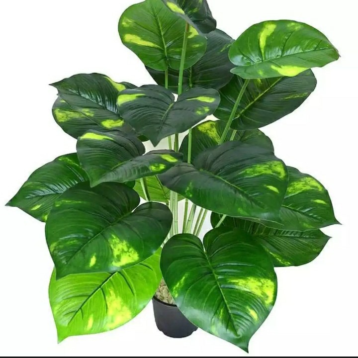 Artificial flowers/Rubber plant washable(Height 20 inches roughly)